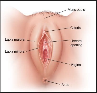 Vaginal cysts lump types, symptoms, and treatment png 405x389